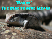 Barry Blue Tongue